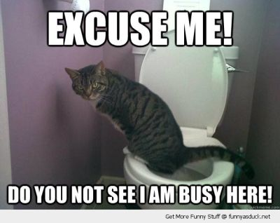 funny-excuse-me-cat