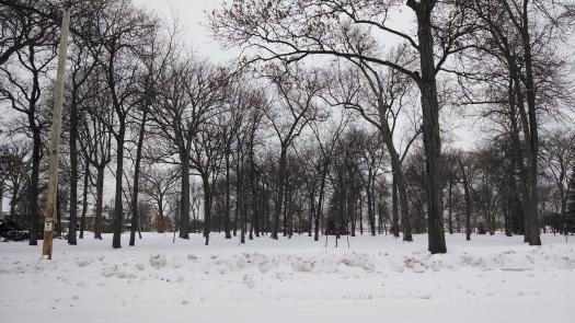 Winter 2014 023