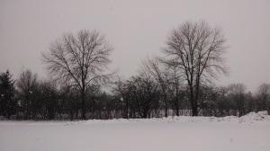 Winter 2014 027