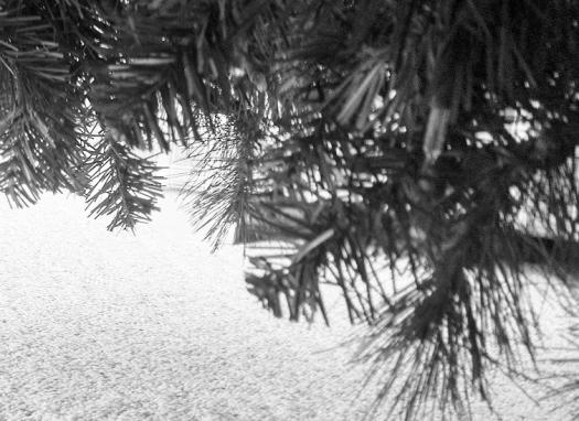 tree 005 - Copy