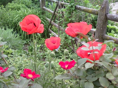 GB Botanical 015