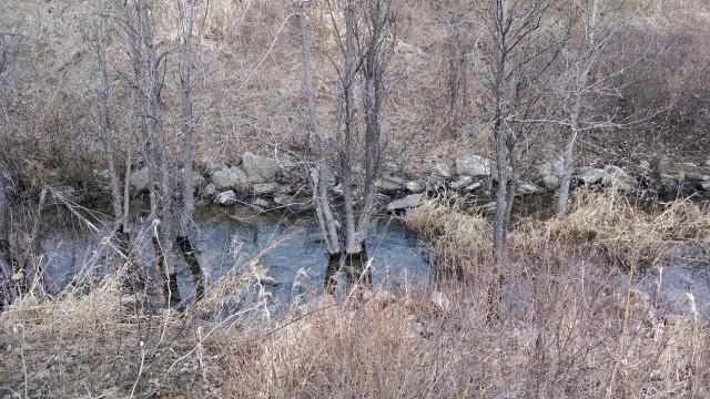 Spring Trail 010