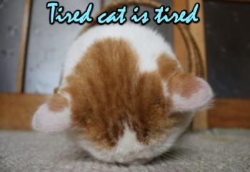 Cat Idea 3
