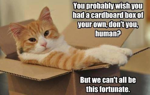 cats-and-boxes