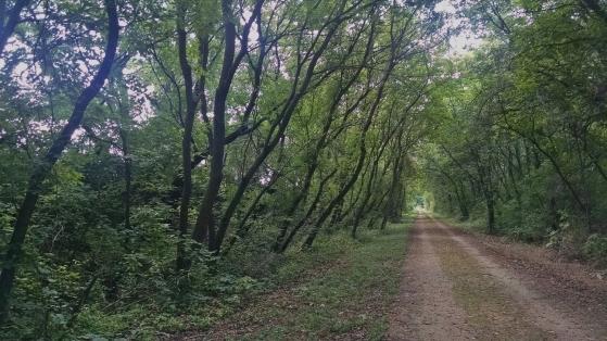Wild Goose Trail 009