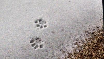 Footprints 006