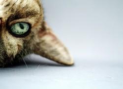 Upside-down-cat