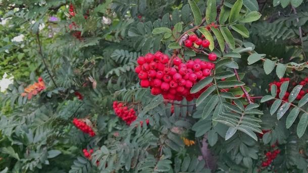 GB Botanical 017