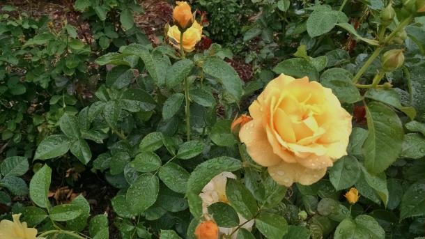 GB Botanical 018