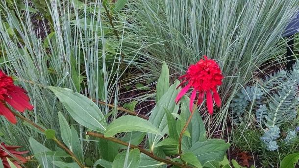 GB Botanical 034