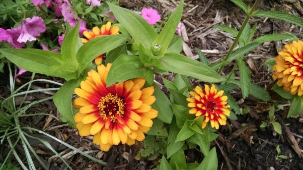 GB Botanical 041
