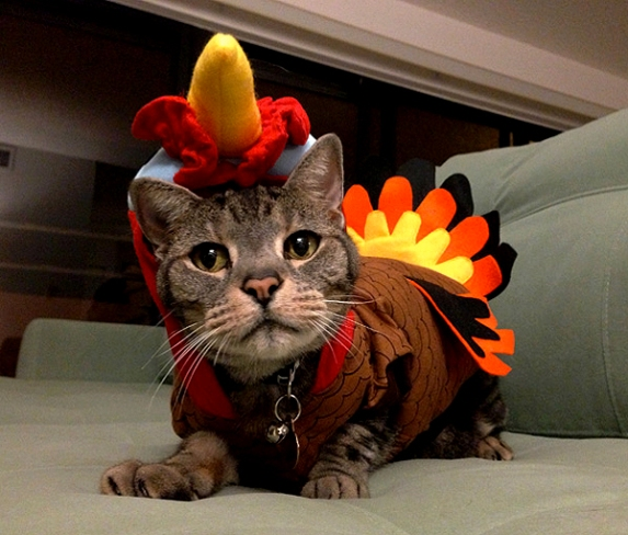 cats-thanksgiving