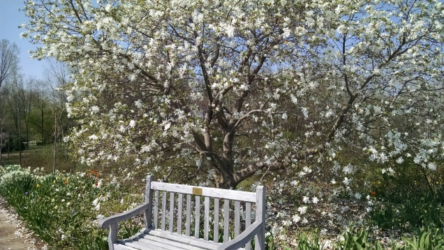 Magnolia tree. If only I had a yard...