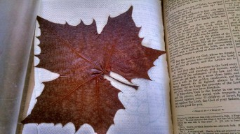 Dad's red leaf will remain betwee the Bible pages