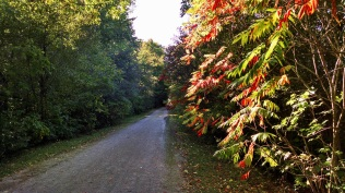 At least the sumac is red.