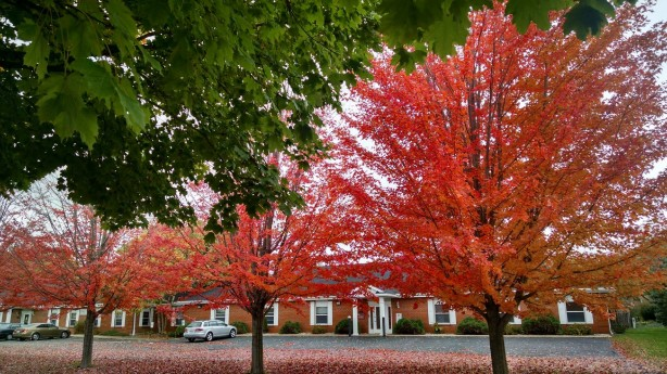 redtrees1