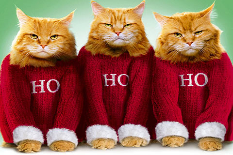 cat-christmas-card_11