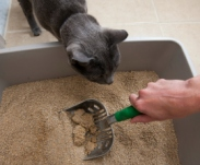 cat-in-the-litter-cleaning