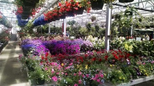 Plant shopping! Spectacular!