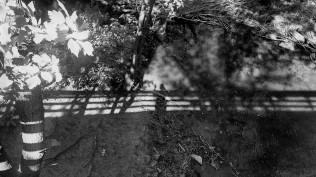 Artistic impressionism and my shadow
