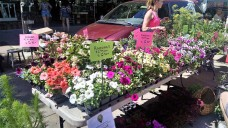 I went to this vendor's farm in May to buy some of my patio plants.