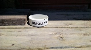 Molly is a trail regular and mascot. This little spaniel has her own water dish on the deck.