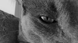 Keeping his eye on the human