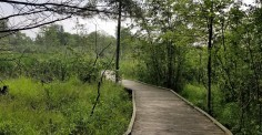 On the Green Circle Trail. It starts with a boardwalk